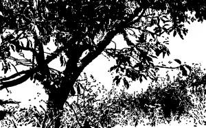 SimonZsolt--Delido--2013
